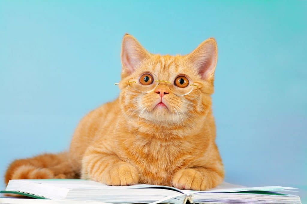 scared cat with real estate contract